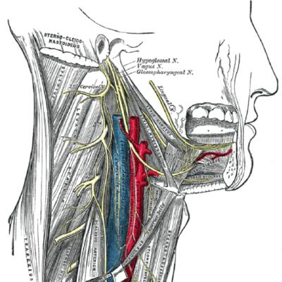 Rối loạn chức năng khớp thái dương hàm